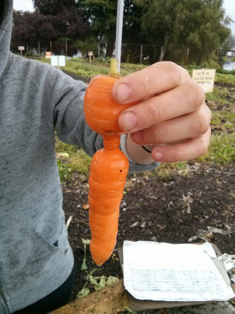 Carrot with curves