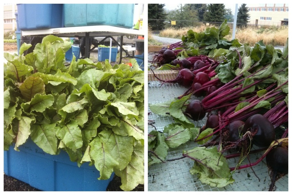 Big beautiful beets are back, too!