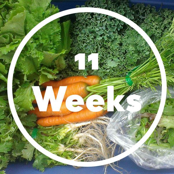 11-weeks-box