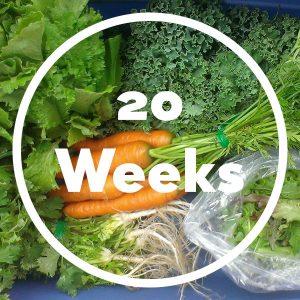 20-weeks-box