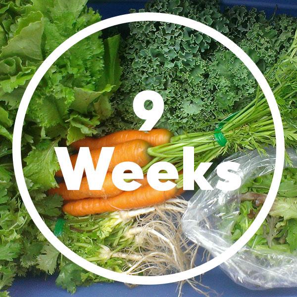 9-weeks-box
